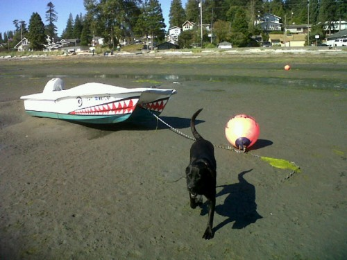 Boats Going Dry,  Happy Dog!