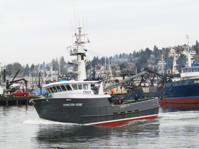 Seiner Shelter Cove, Just of the Ways In Ballard Pac. Fish Yard, Passing Fishermen's Terminal, FILSON Welcome to Ballard & Our Busy Ship Canal, Photography by: Salty Dog Boating News, Salty Sea Chick, Marine Traffic Source!