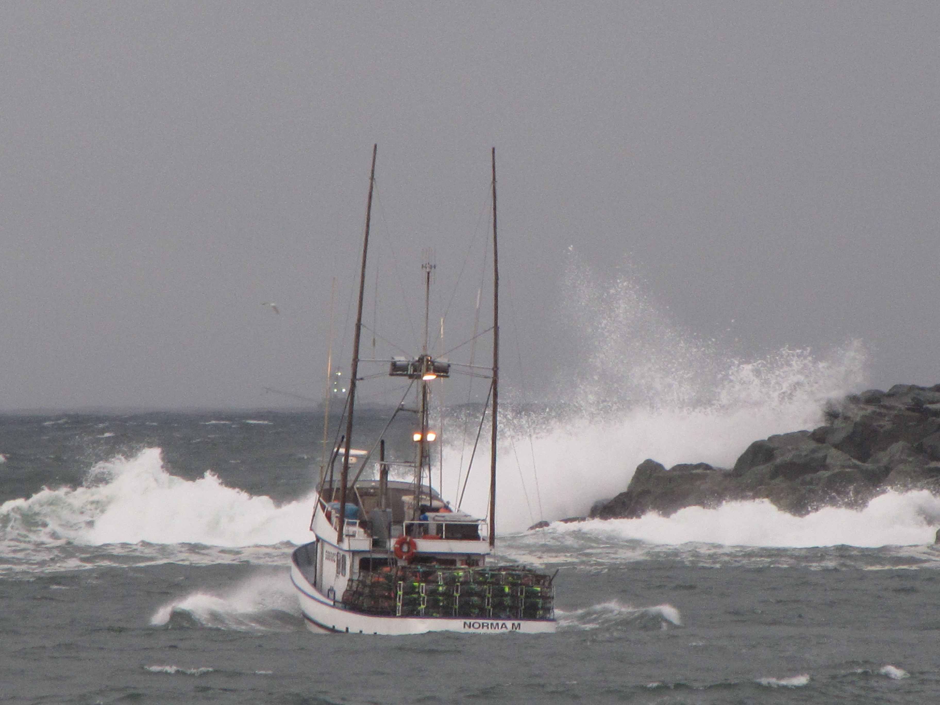Dungeness crab boats oregon wa pnw crabbers dungeness for Crab fishing oregon