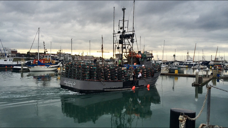 Dungeness crab boats oregon wa pnw crabbers dungeness for California fishing season 2017